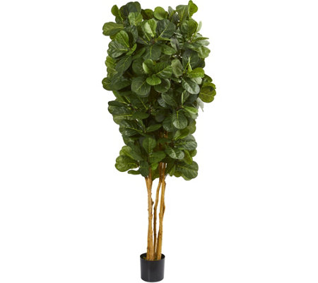 7' Fiddle Leaf Fig Tree in Black Planter by Nearly Natural