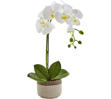Phalaenopsis Orchid in Ceramic Pot by Nearly Natural