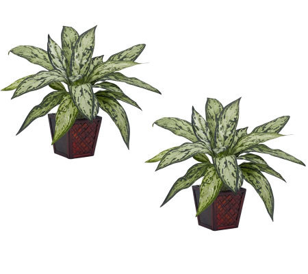 Silver Queen Set of 2 Plants by Nearly Natural