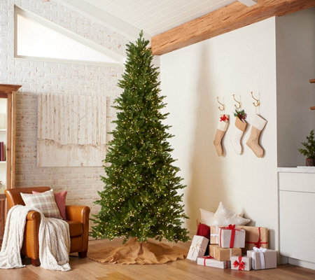 Christmas in July at QVC! Santa's Best Alberta Spruce Starry