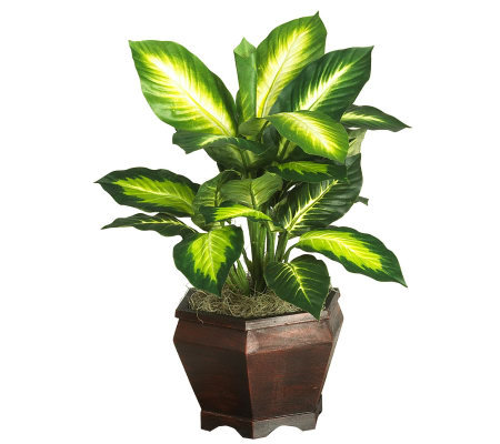 Golden Dieffenbachia w/Wood Vase Plant by Nearly Natural