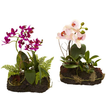 Set of 2 Orchid Island Arrangement by Nearly Natural