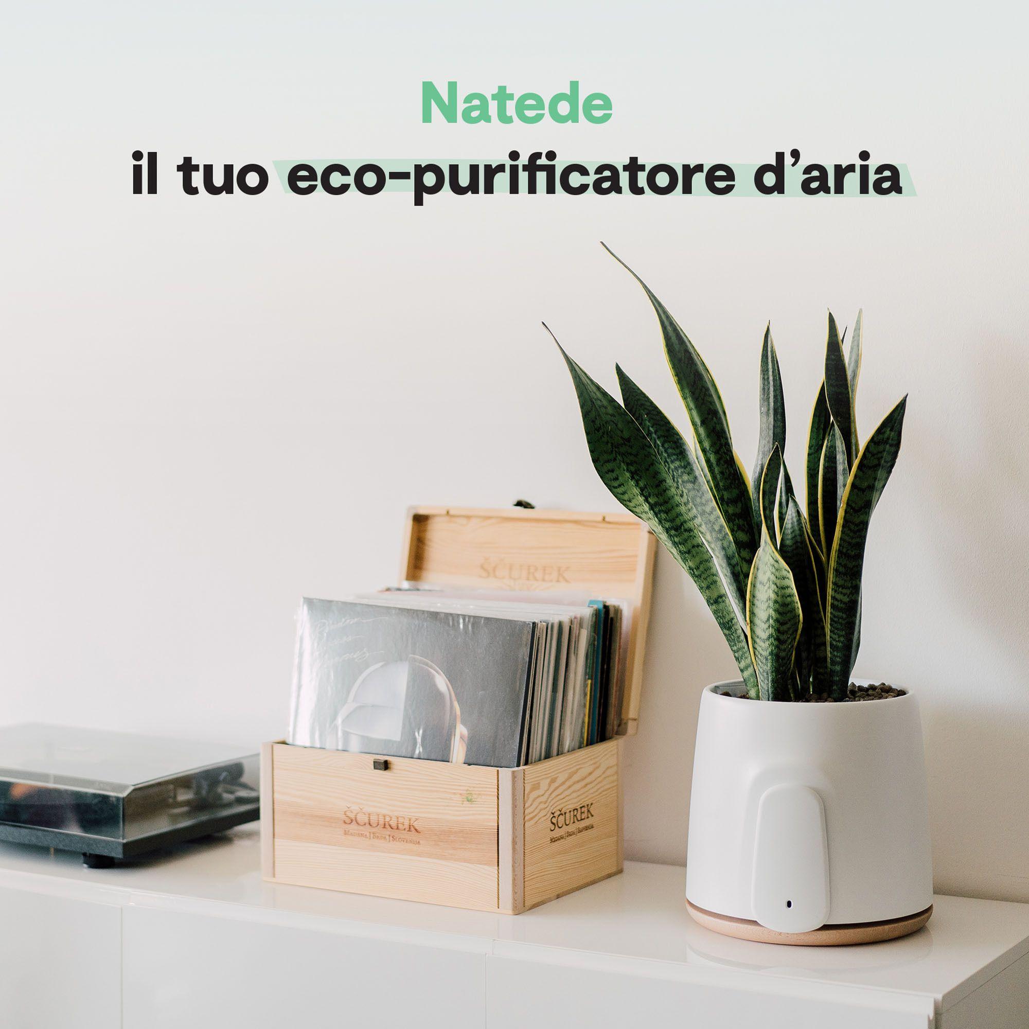 Natede purificatore d'aria naturale