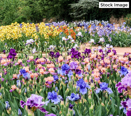 Roberta's 65-Piece Colorful and Carefree Spring Garden
