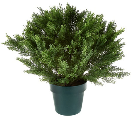 "National Tree Feel Real 22"" Globe Cedar Shrub with Growers Pot"