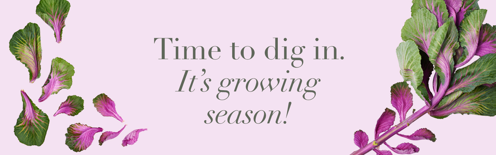 Time to dig in. It's growing season!