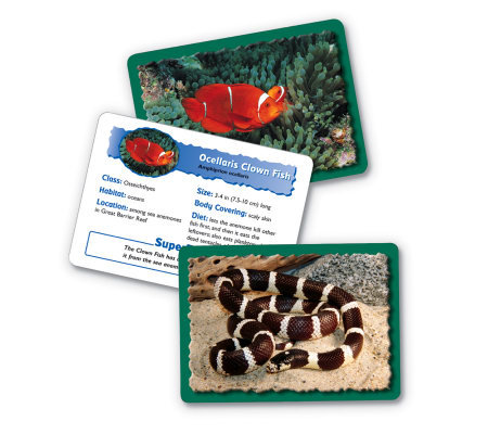 Animal Classifying Cards Combo Pack by LearningResources