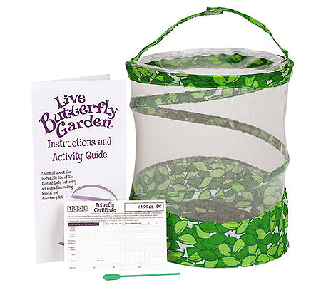 Butterfly Garden by Insect Lore - Page 1 — QVC.com