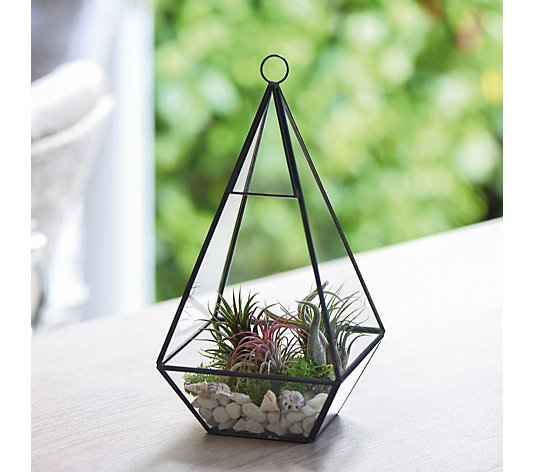 Thompson & Morgan Air Plant Collection
