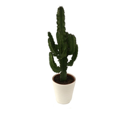 Hayloft Plants 1 x Cowboy Cactus with Pot