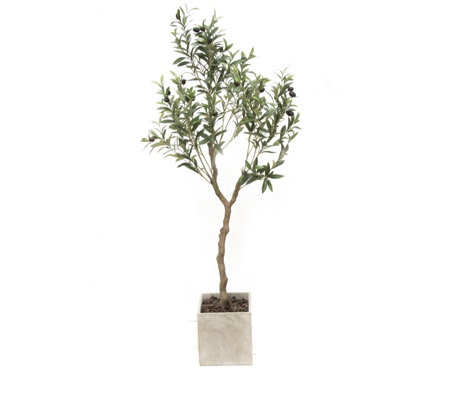 Peony Olive Tree in a Concrete Square Pot