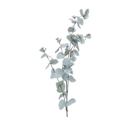 611ff2f222cb Peony Set of 3 Eucalyptus Stems - QVC UK