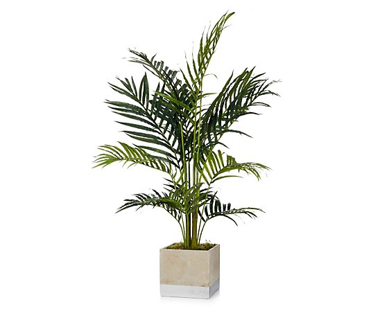 Peony Palm Set in Moss in a Cement Cube with Silver Band