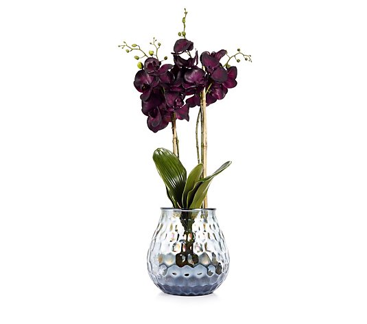 Peony Phalaenopsis Orchids Set with Bark in Coral Textured Vase