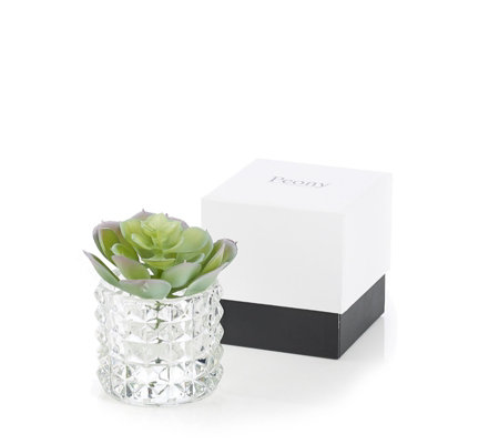 Peony Succulents in Textured Cylinder & Gift Box