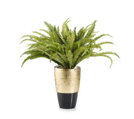 Peony Boston Fern in Black & Gold Vase