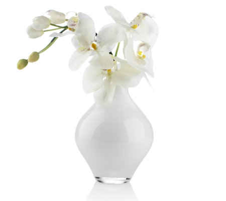 Kelly Hoppen White Orchid in Glass Vase